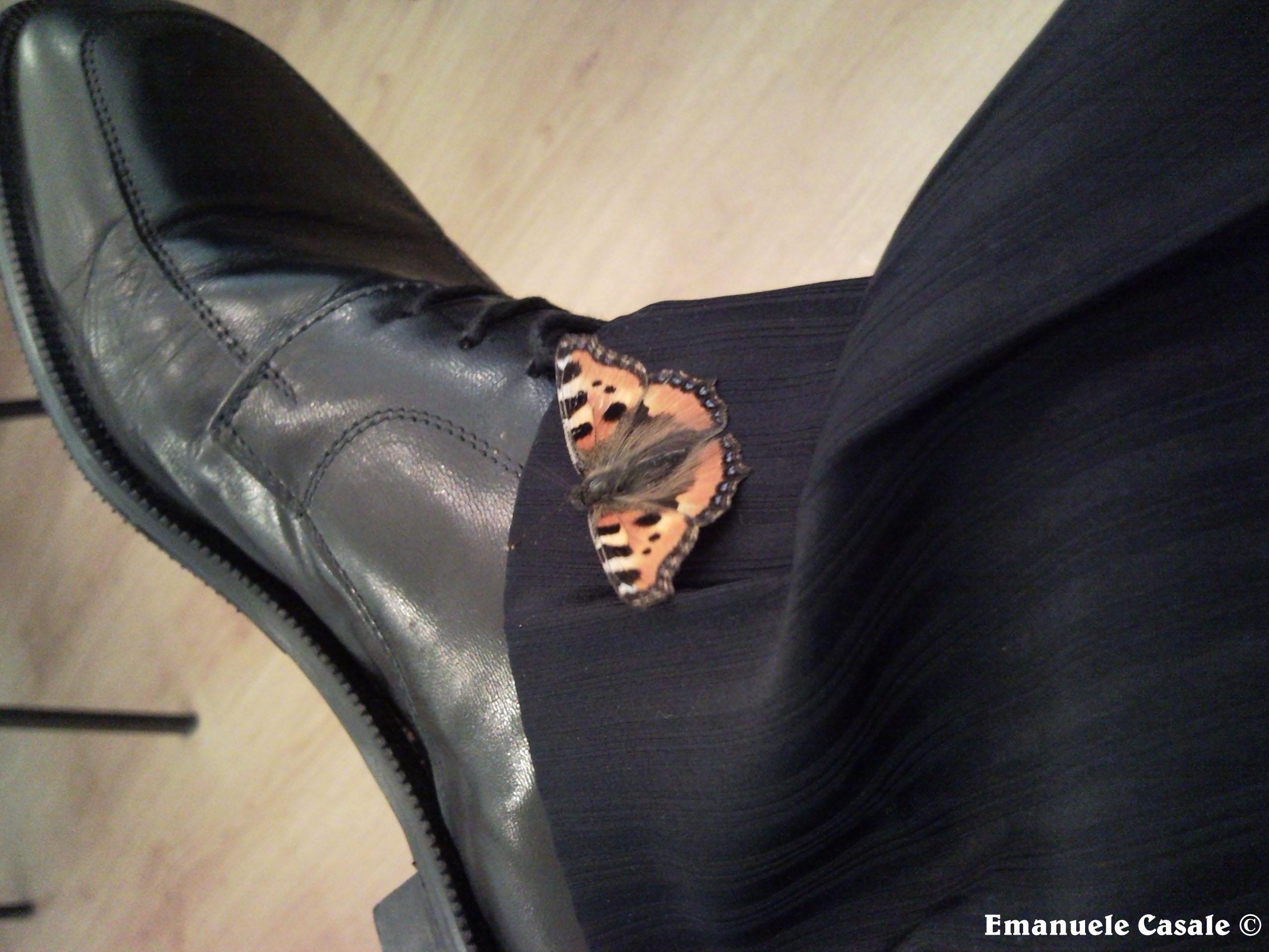 La farfalla, simbolo dell'Anima