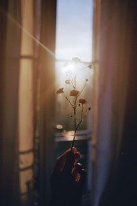 Fiore germe realizzare se stessi entelechia