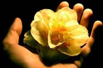 Riuscire a vedere l'essenziale. Essere vivi è essere presenti. (koan zen)