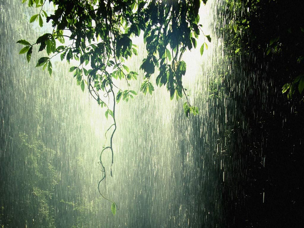 """""""The Rain Song"""", dei Led Zeppelin: un inno al risveglio della vita interiore"""