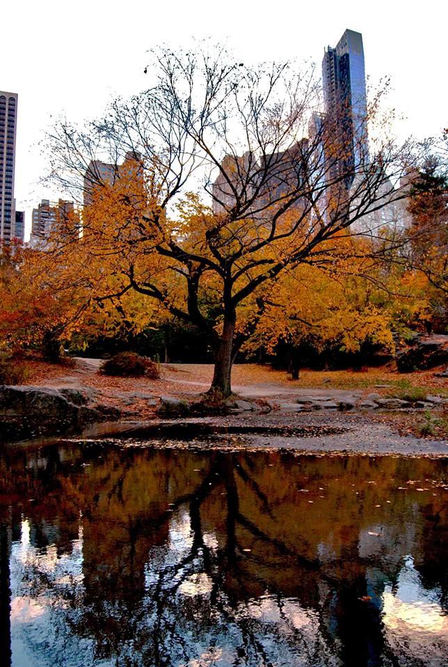 «Vivere il proprio autunno interiore. Esso solamente produce i germogli della primavera.» (di Emanuele Casale)