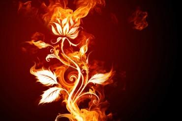 Fire Rose Rosa Fiore Fuoco passione Resize
