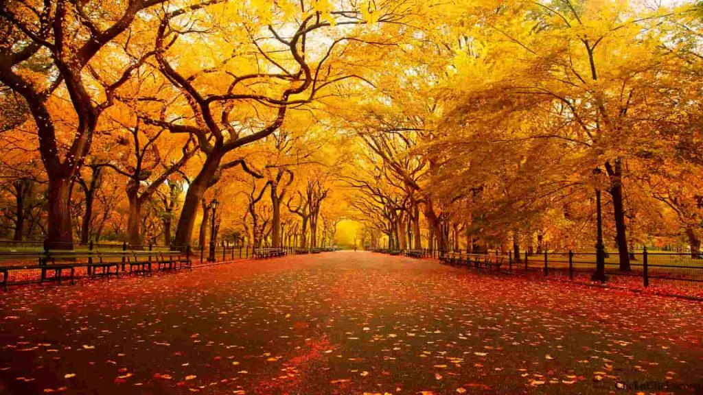 Autunno Psicologia New York Central Park