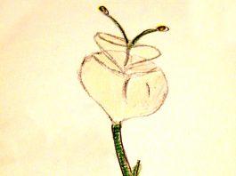 Fiore Immaginazione