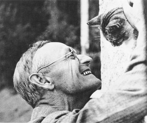 Hermann Hesse Gatto