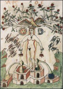 ALBERO FILOSOFICO (qui il libro di Jung sul tema!)